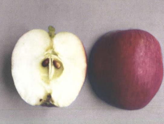 Осенние сорта яблок - Сентябрьское (Аэлита) Сад и огород