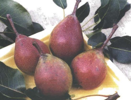 Осенние сорта груш - Мичуринская красавица Сад и огород