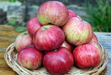 Осенние сорта яблок - Анис полосатый (Анис серый) Сад и огород