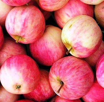 Зимние сорта яблок - Башкирский красавец Сад и огород
