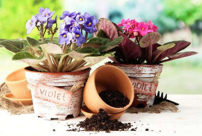 Пересадка комнатных растений Полезные советы