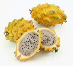 Сладкий кактус питахайя (Pitahaya) Комнатные растения и цветы